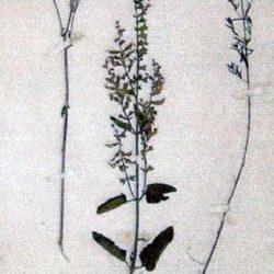 Herbier : Jacabre